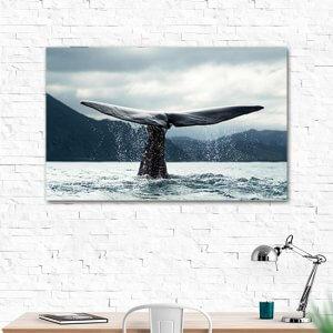 Опашка на кит