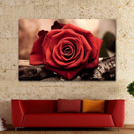 Царствена роза