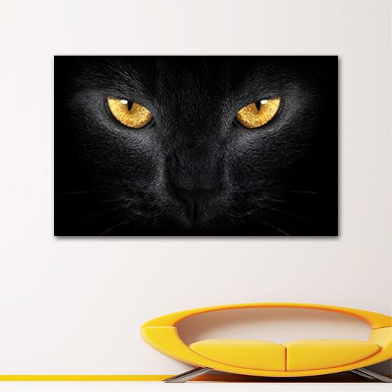 Черна котка
